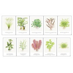 Tropica Art Cards 13x18cm SET 1+2 (10 Cards)