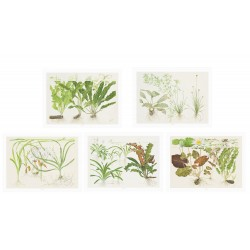 Tropica Art Poster Set of 5 - 40x30cm