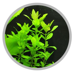Potassium for green aquarium plants