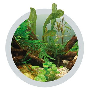 Ferro for green aquarium plants